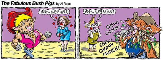 Alpha male and alfalfa male