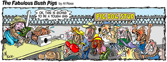 Gig at Pig Dog Stud